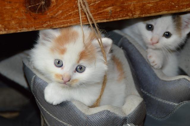 koťata v botách